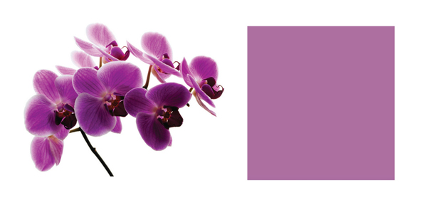Orchid radiant color 2014 – how to wear it